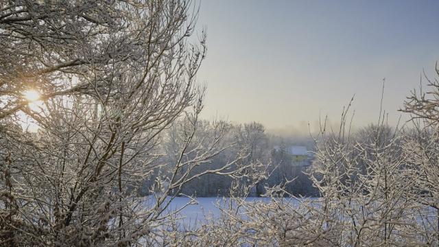 Schnee, Snow, Biberach, Trees, Sunlight, Landscape, Oberschwaben